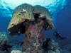 Diver in coral reef